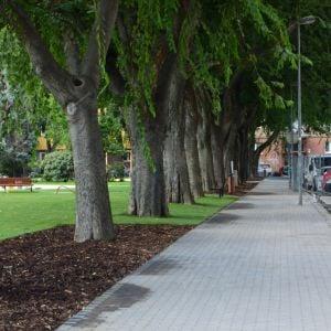 Stromoradie od Alžbetínskej ulice teraz krajšie vynikne.