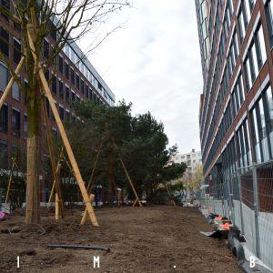 Vysadené sú aj listnaté aj ihličnaté stromy