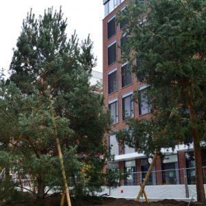 Časť stromov je veľmi vysoká