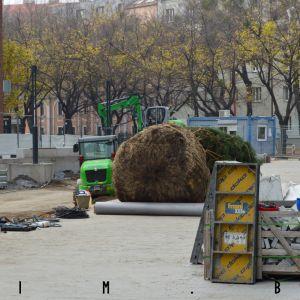 Nový strom pripravený na zasadenie