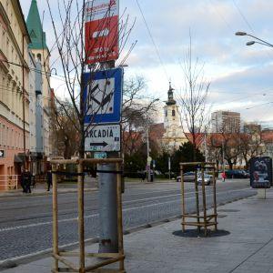 Novovysadené stromy na Hurbanovom námestí